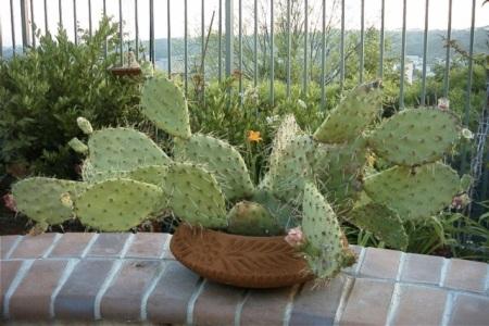 My cactus, 2011.