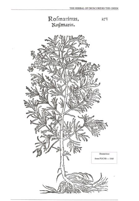 Rosmarinus Fuchs 1545 001